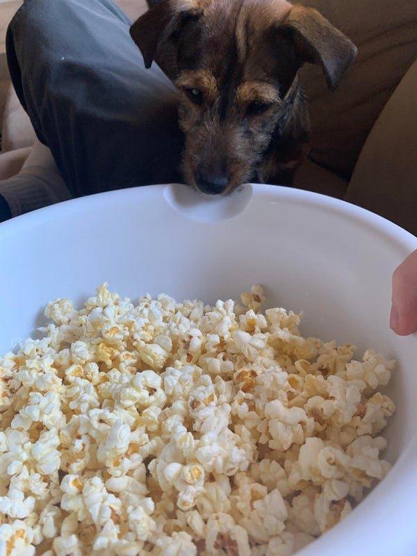 Pets Staring At Food (35 pics)