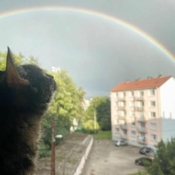 This Cat Loves Adventures (28 pics)