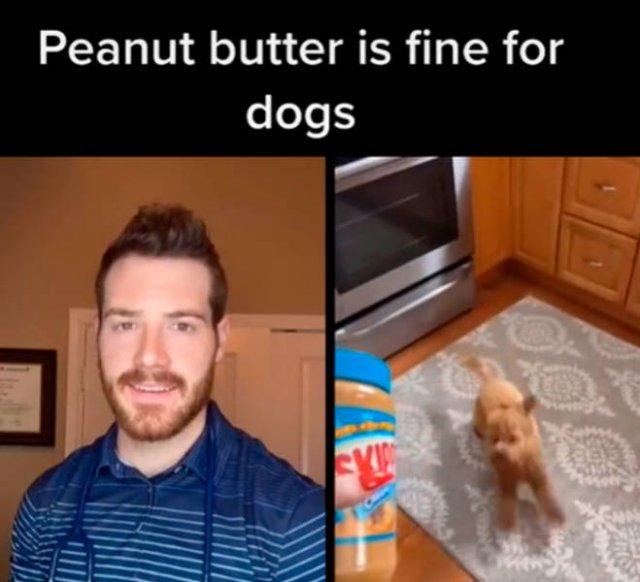 Veterinarian Shares Pet Care Tips (29 pics)