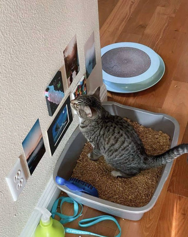 Spoiled Cats (50 pics)