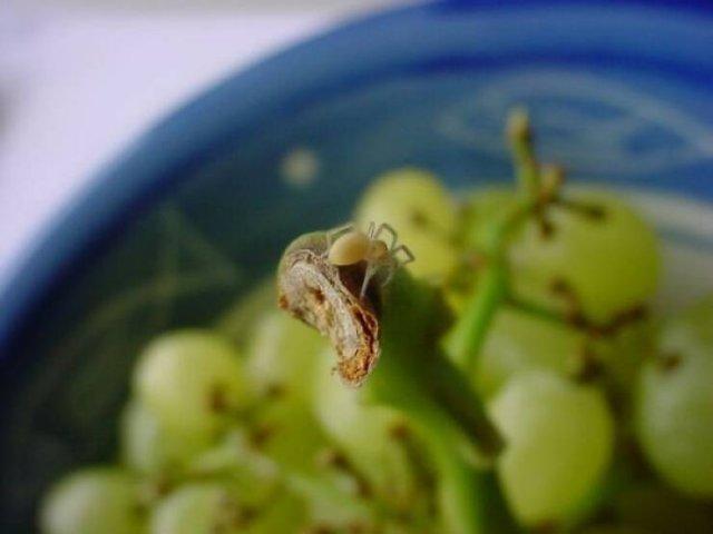 This Is Arachnophobia (29 pics)