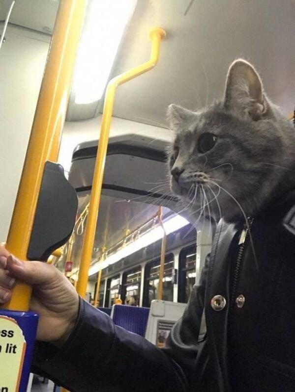 Cat Humor (29 pics)