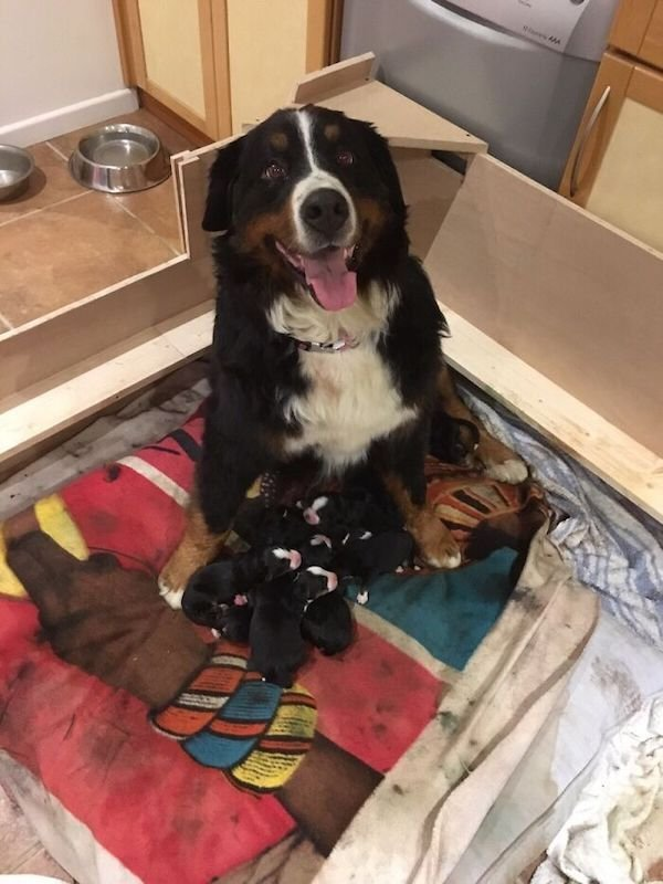 Dogs With Their Puppies (36 pics)