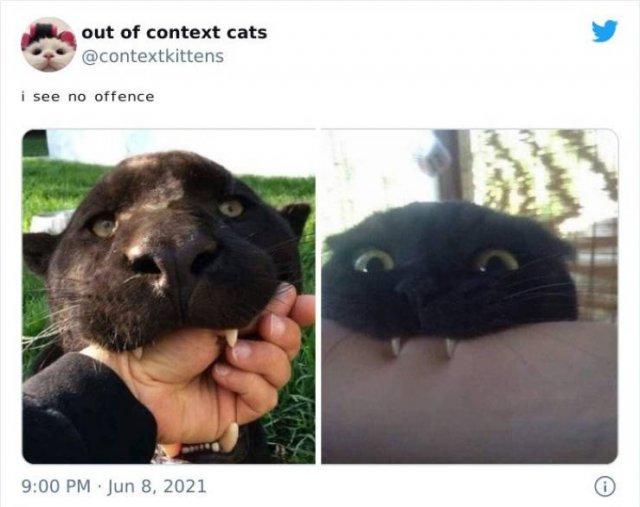 Hilarious Cats (48 pics)