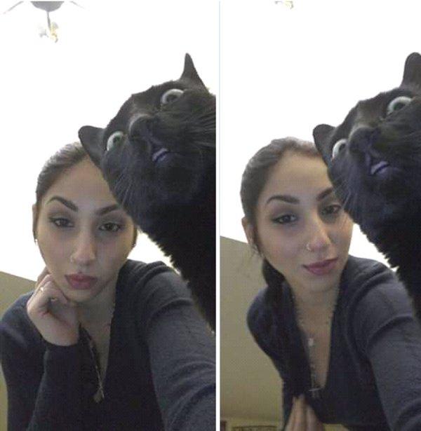 Funny Pets (20 pics)