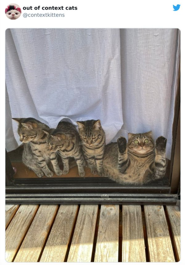 Hilarious Cats (30 pics)