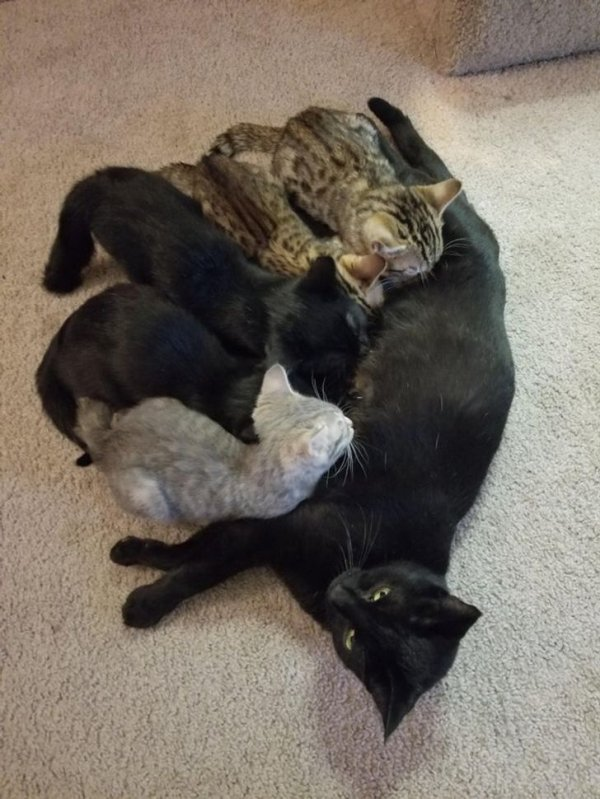Animal Motherhood (20 pics)