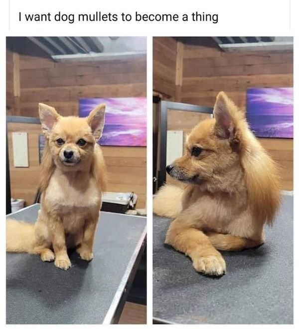 Funny Animal Memes And Pictures (61 pics)