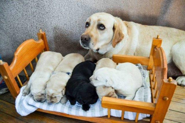 Animal Parenting (20 pics)