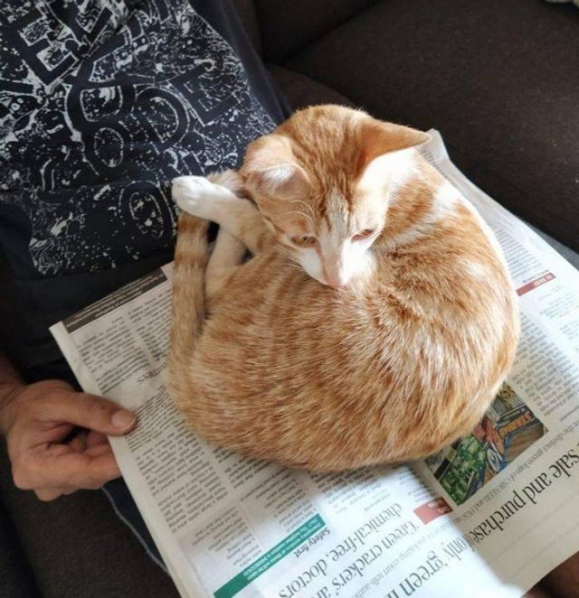 Pets Find Best Places For Their Rest (19 pics)