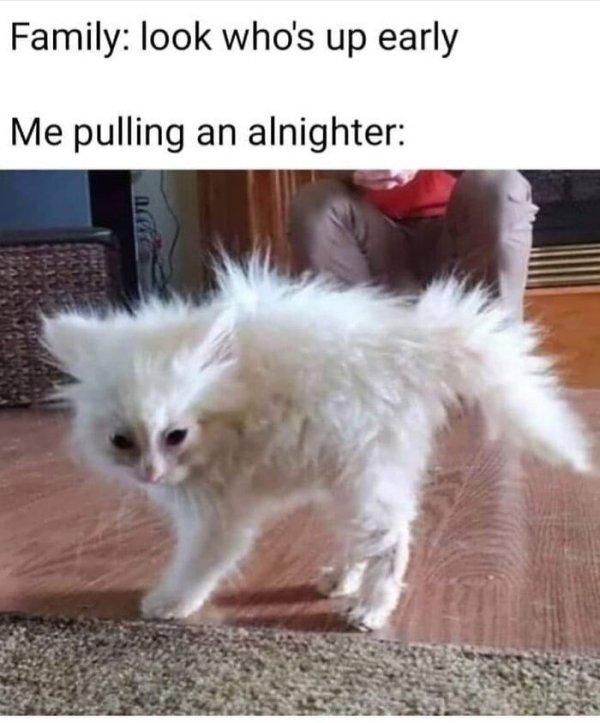 Hilarious Cats (35 pics)