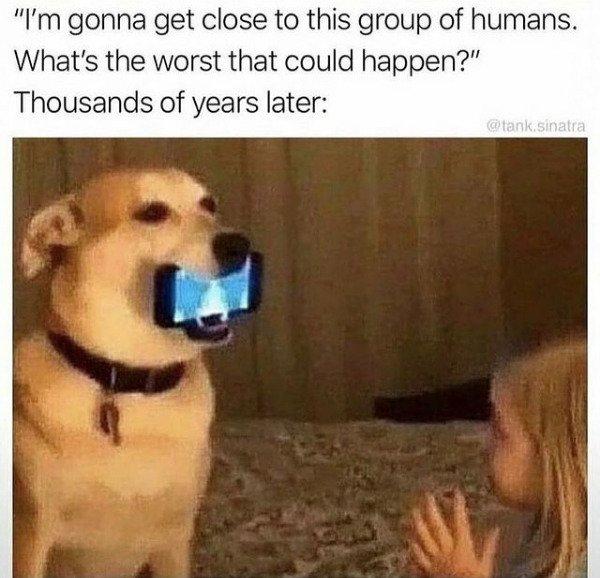 Dogs Memes (32 pics)