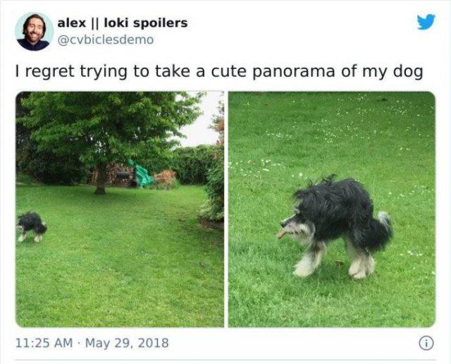 Accidental Humor (45 pics)