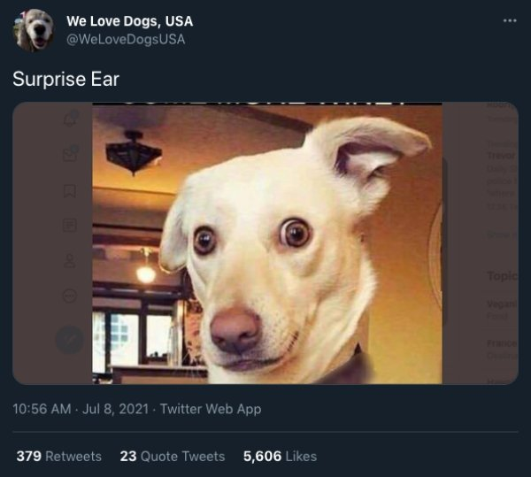 Cats And Dogs Tweets (31 pics)
