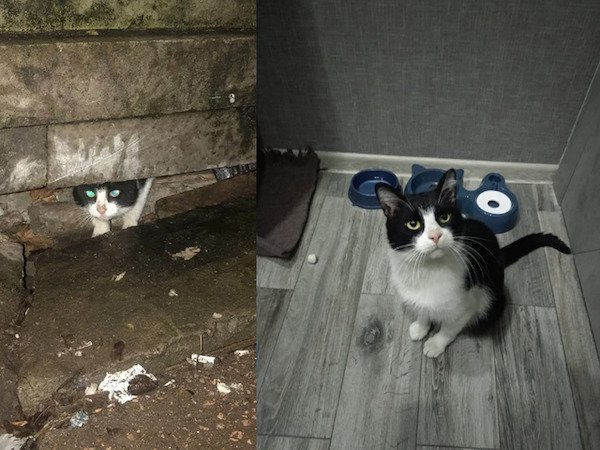 Animals Before And After Adoption (29 pics)
