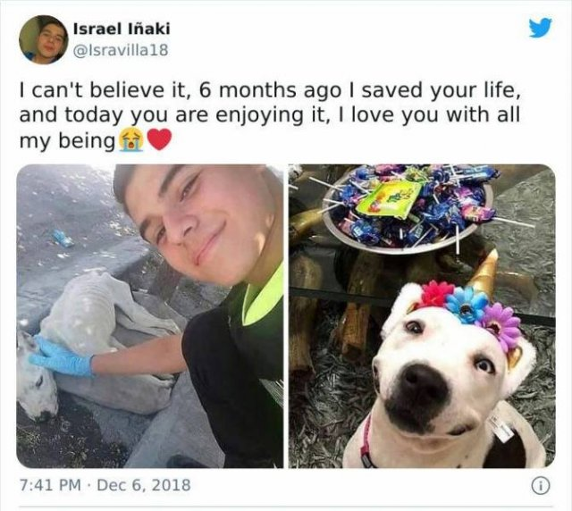 Wholesome Stories (49 pics)