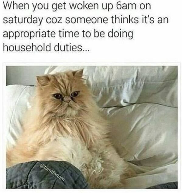 Funny Cat Memes And Pictures (32 pics)