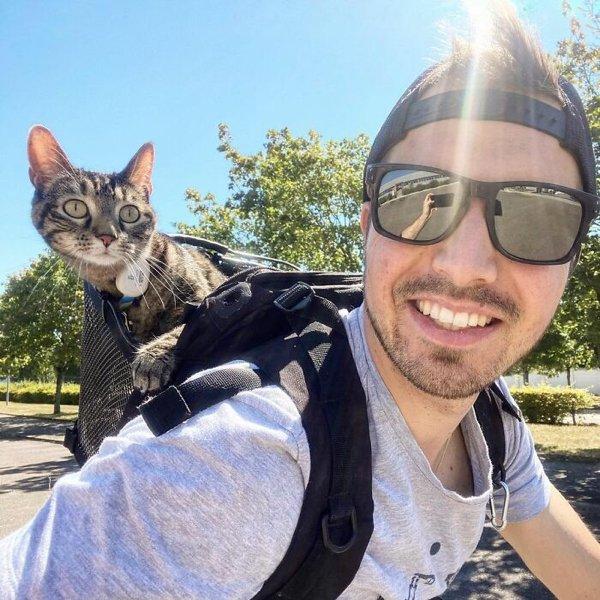 Traveling Cat (30 pics)