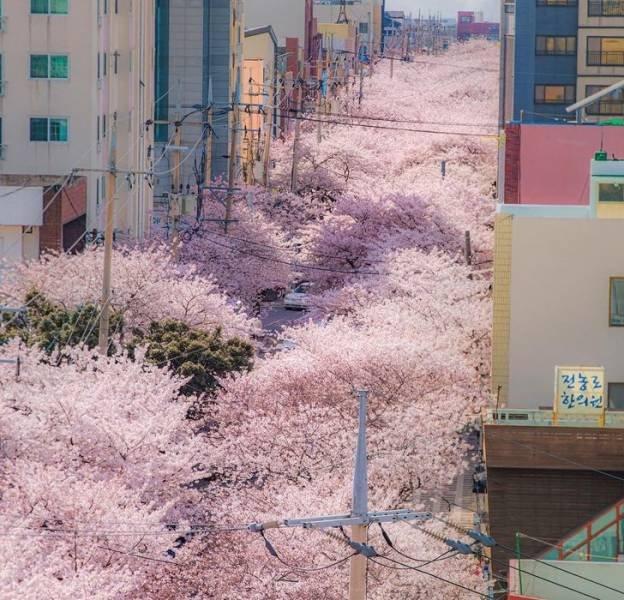 Life In South Korea (19 pics)