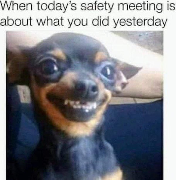 Funny Dogs Memes And Pictures (33 pics)