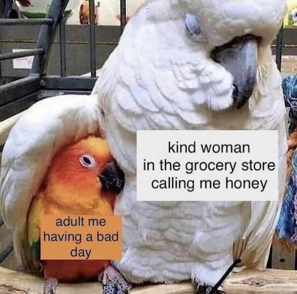Wholesome Memes (57 pics)