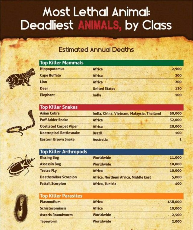 World's Most Deadliest Animals (8 pics)