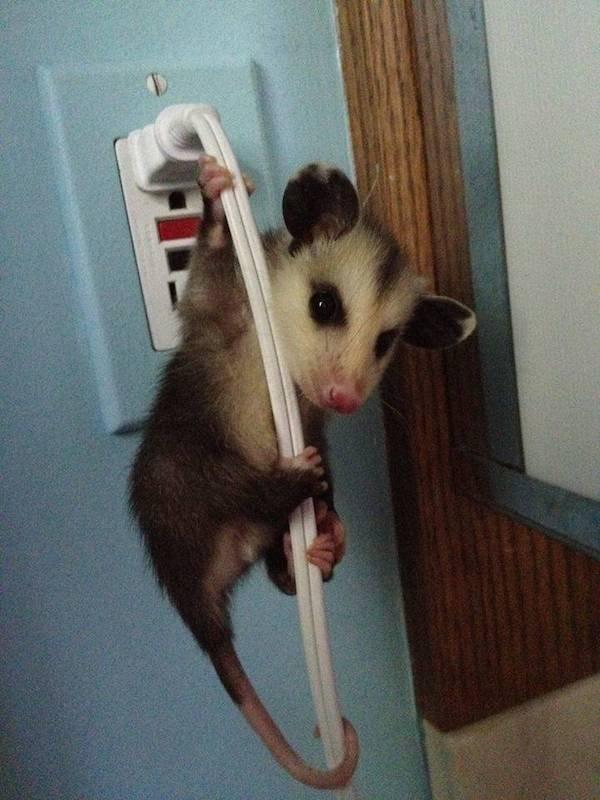 Funny Animals (52 pics)