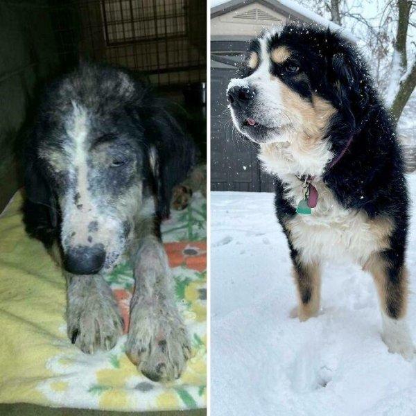 Animal Rescue Stories (34 pics)