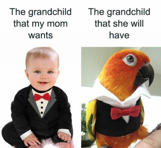 Bird Memes (47 pics)