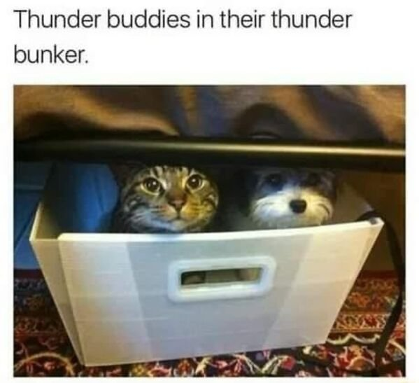Cats Memes And Pictures (32 pics)