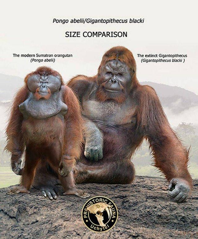 Extinct Prehistoric Animals Vs. Modern Animals (37 pics)