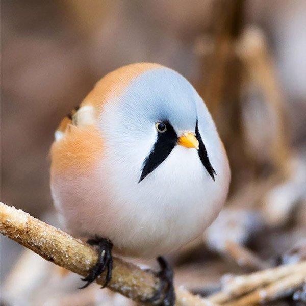 Very Round Animals (32 pics)