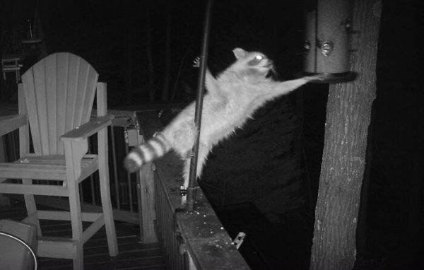 Weird Wildlife Photography (28 pics)
