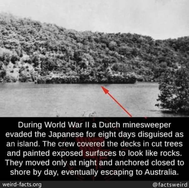 Interesting Facts (49 pics)