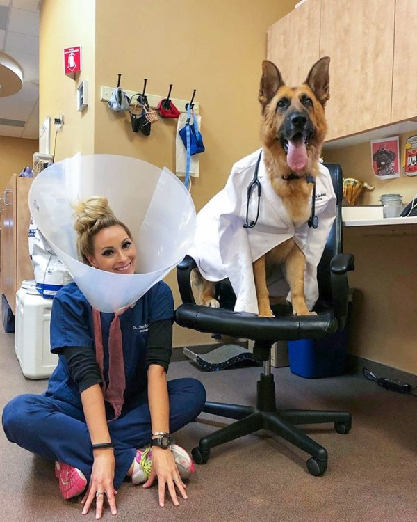 Veterinarians Share Their Patients (32 pics)