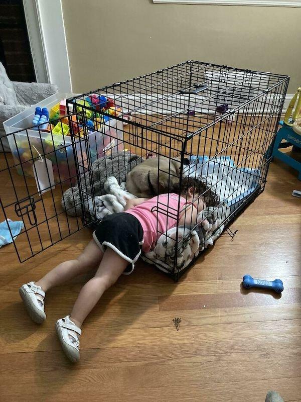 Rescued Pets (28 pics)