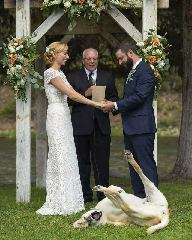Funny Wedding Photos (39 pics)