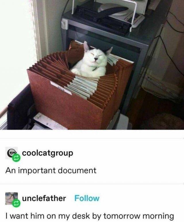Hilarious Cats (50 pics)