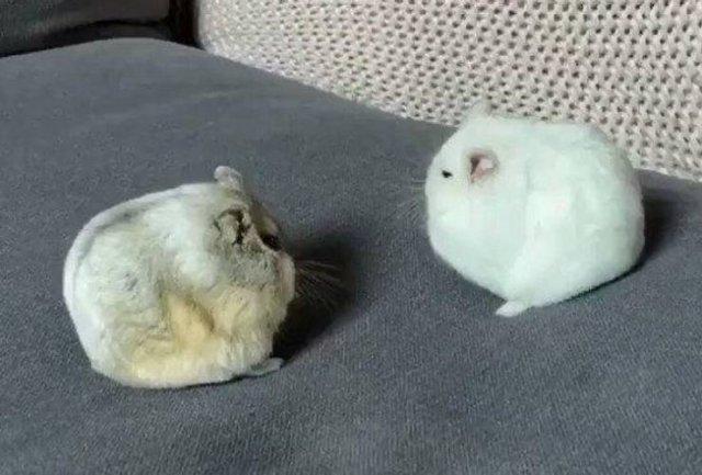 Cute Pets (20 pics)
