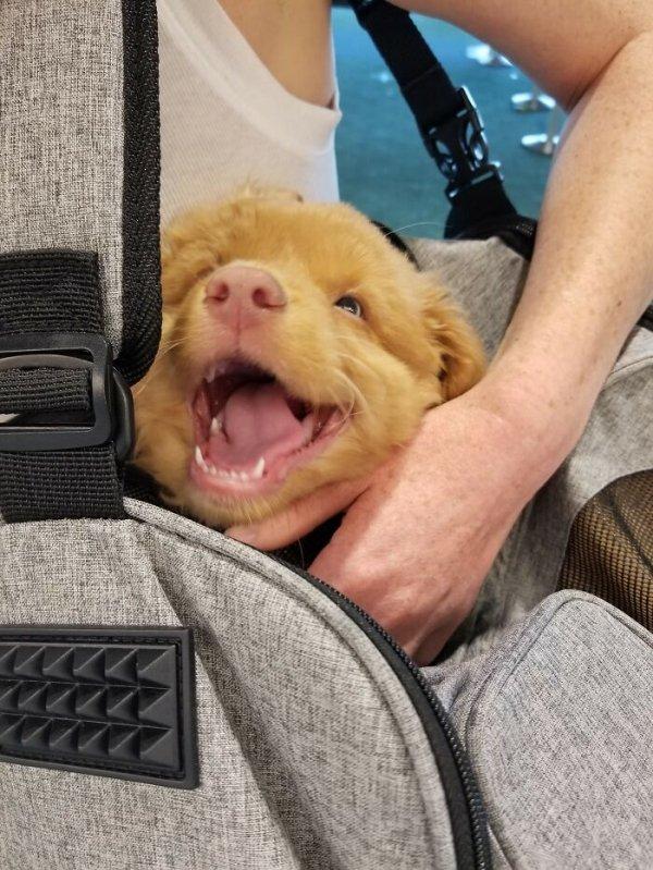 Cute Dogs (31 pics)