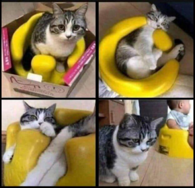 Hilarious Cats (37 pics)