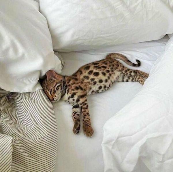 Cute Animals (38 pics)