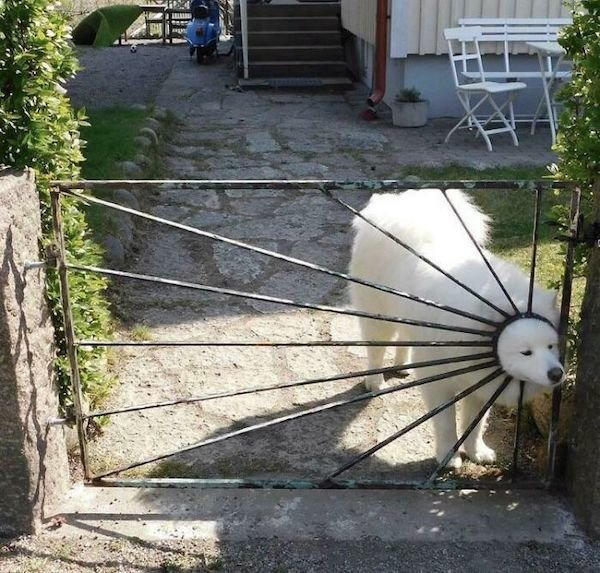 These Dogs Are Broken (32 pics)