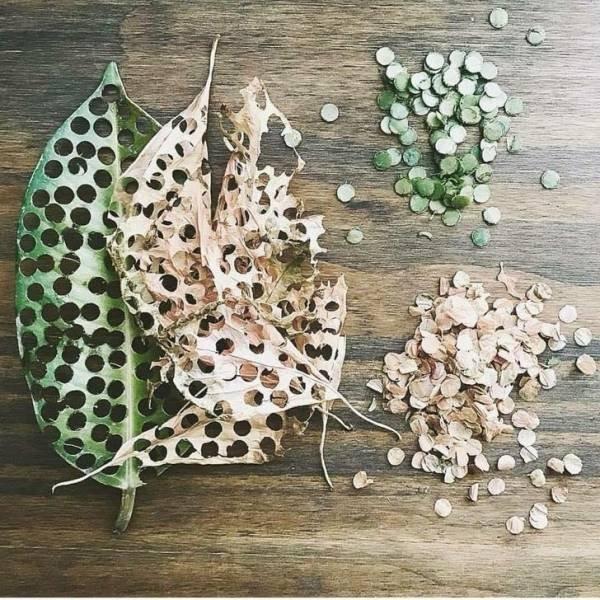 Eco-Friendly Tricks (21 pics)