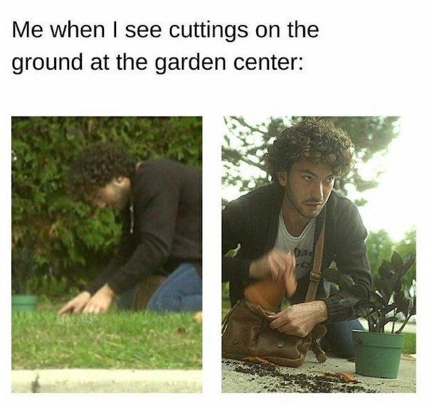 Plant Memes (32 pics)