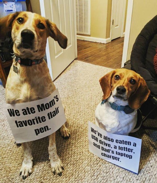 Pet Shaming (31 pics)