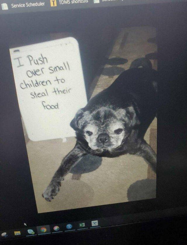Dogs Shaming (40 pics)