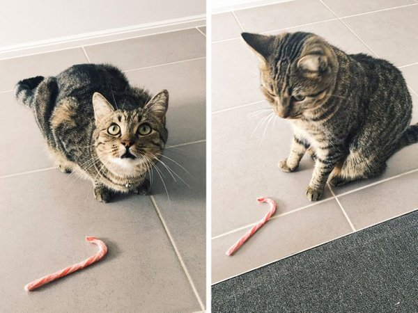 When Your Pet Have A Present For You (20 pics)