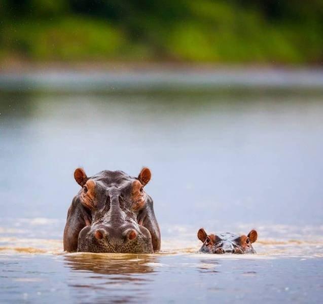 Cute Animals (24 pics)