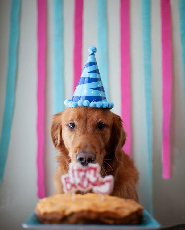 Dog Myths (10 pics)